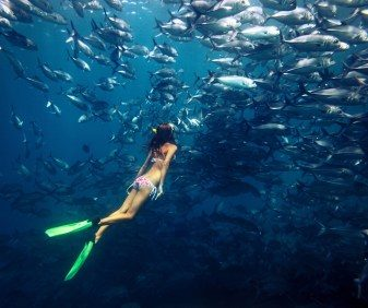 freediving with fishes